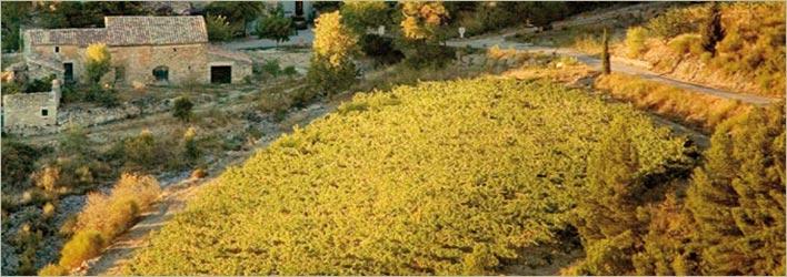 Le Domaine de Cantaussel - AOC Minervois La Livinière wines