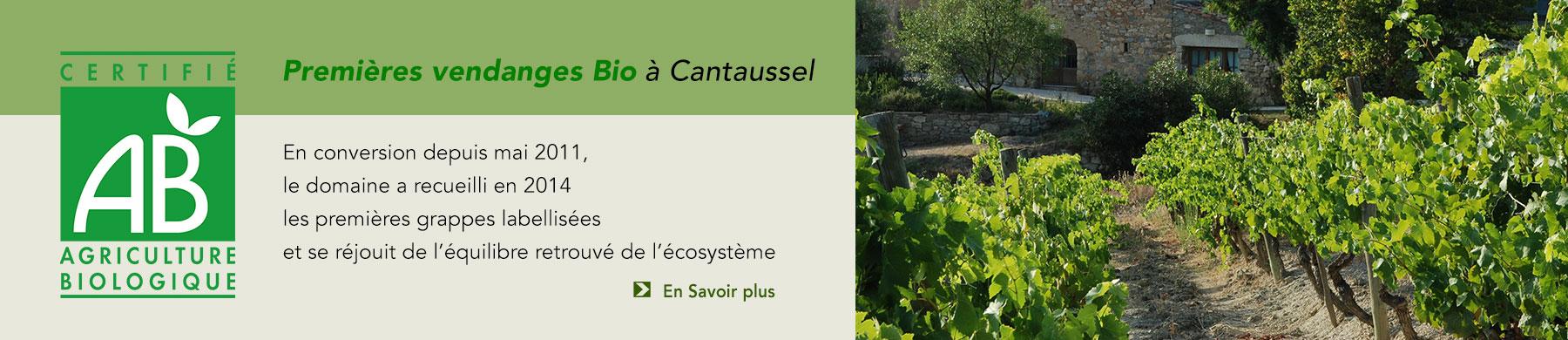 Première Vendanges BIO à cantaussel